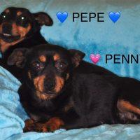 Penny&Pepe