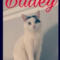 Wer hat Bailey in Fredeburg gesehen?